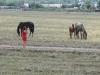 Кони возле Теренсая