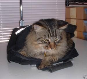 Кошка в комплект не входит!