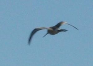 Птица с длинным клювом