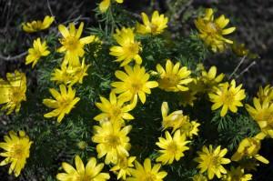 степные цветы