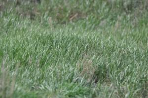 трава в степи