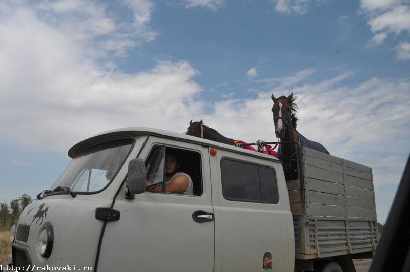 Перевозка лошадей в машине