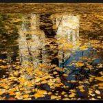 Осенний ТИЦ