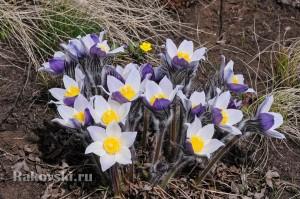 Цветы в степи