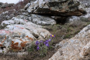 Цветы в скалах
