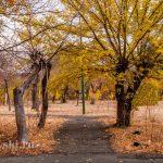 В осеннем парке