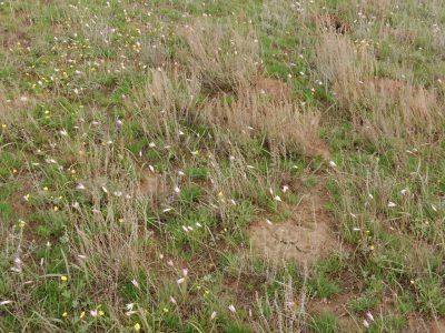 Весна в степи