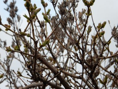 Весна в каждом кадре