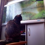 Кошка в ожидании чуда