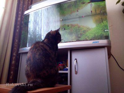 кошка и рыбки