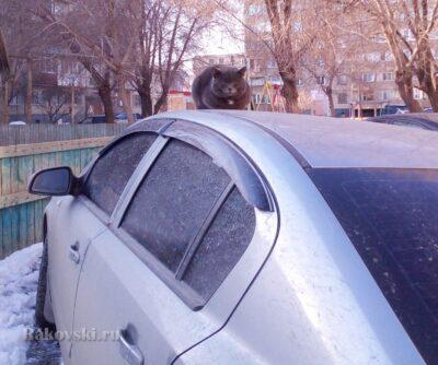 Кошка на раскаленной крыше