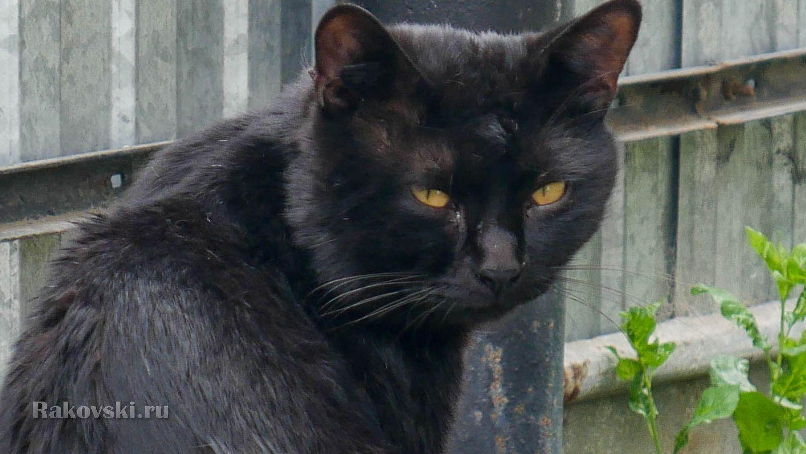 Колоритный кот